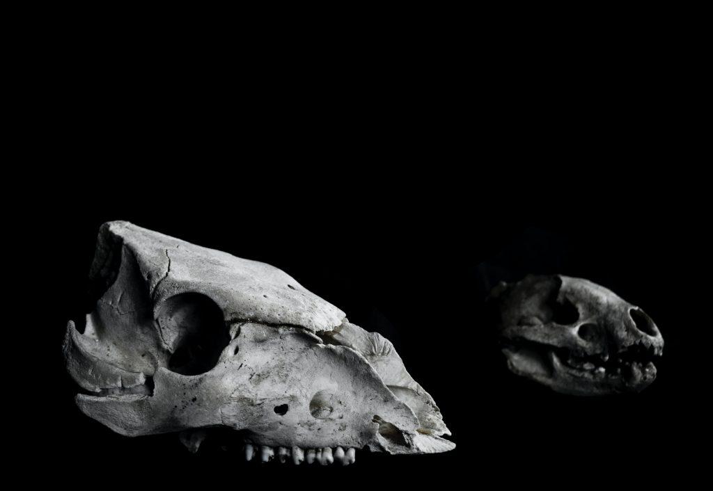 Fósil