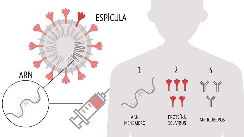 Ejemplo de ARN